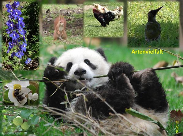Giant Panda: 22. Mai – Internationaler Tag der Biologischen Vielfalt