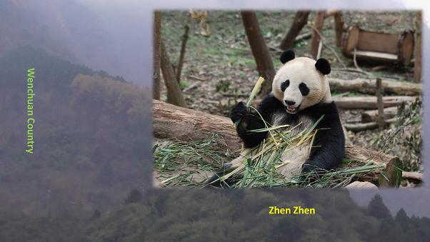 Giant Panda: Der Tag der Erde