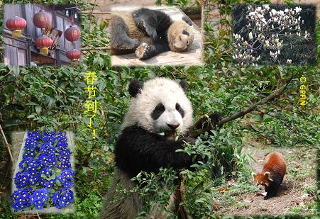 Giant Pandas: Frühlingsfest – Neujahr in China