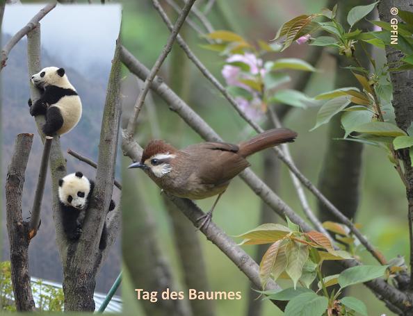 Giant Pandas: Der Tag des Baumes