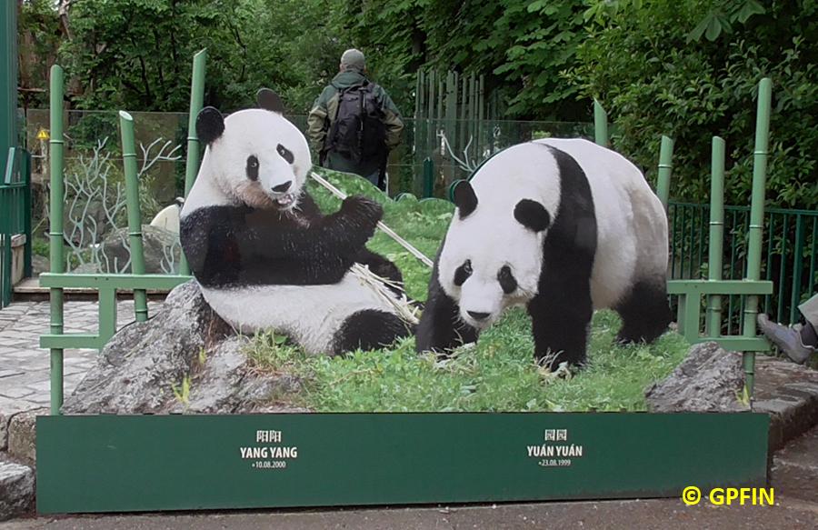 Giant Pandas: Yuan Yuan & Yang Yang