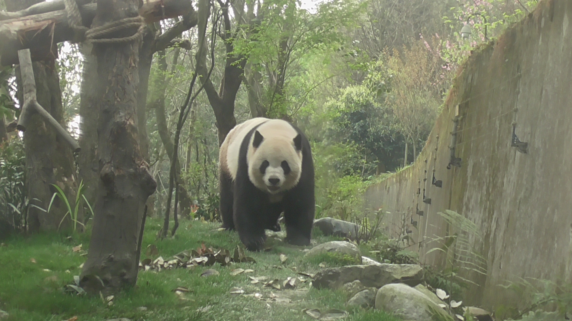 Giant Panda: 03. März – World Wildlife Day