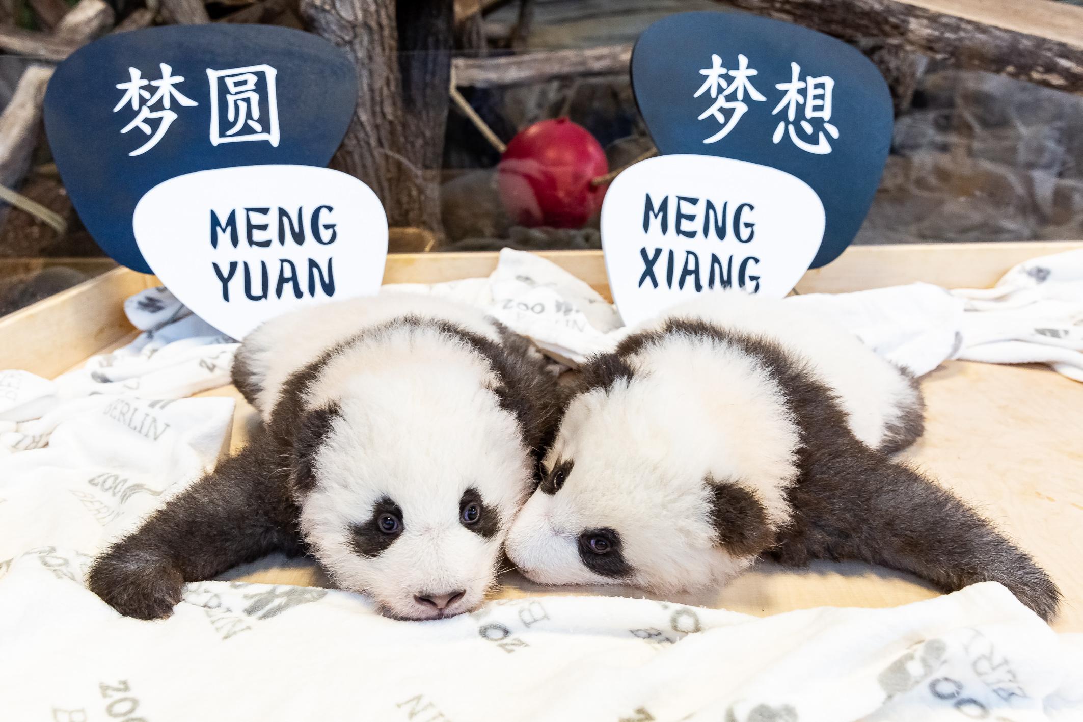 100 Tage doppeltes Panda-Glück